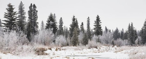rsz_1-calgary-alberta-canada-snow-covered-michael-interisano