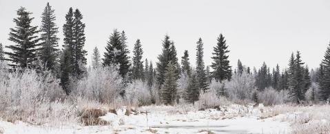 rsz_1-calgary-alberta-canada-snow-covered-michael-interisano